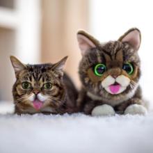 'Lil Bub invades the world of plush