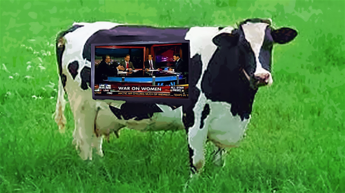 Fox News Cow
